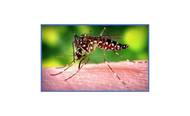 Veintiún casos del virus Zika en Cuba