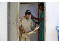 cocodrilos cubanos nacidos en suecia vuelven a casa