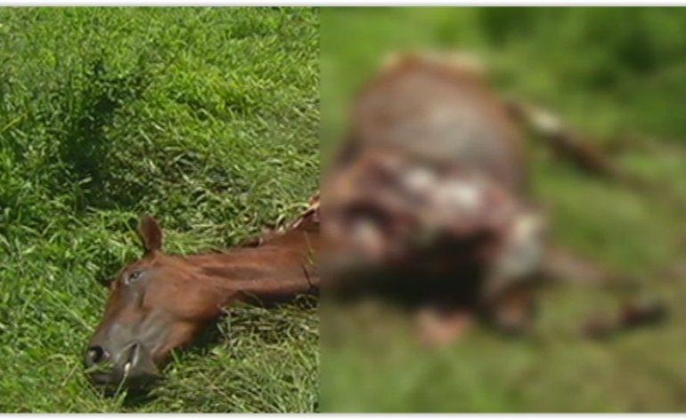 Encuentran un caballo desmembrado en una finca en Hialeah