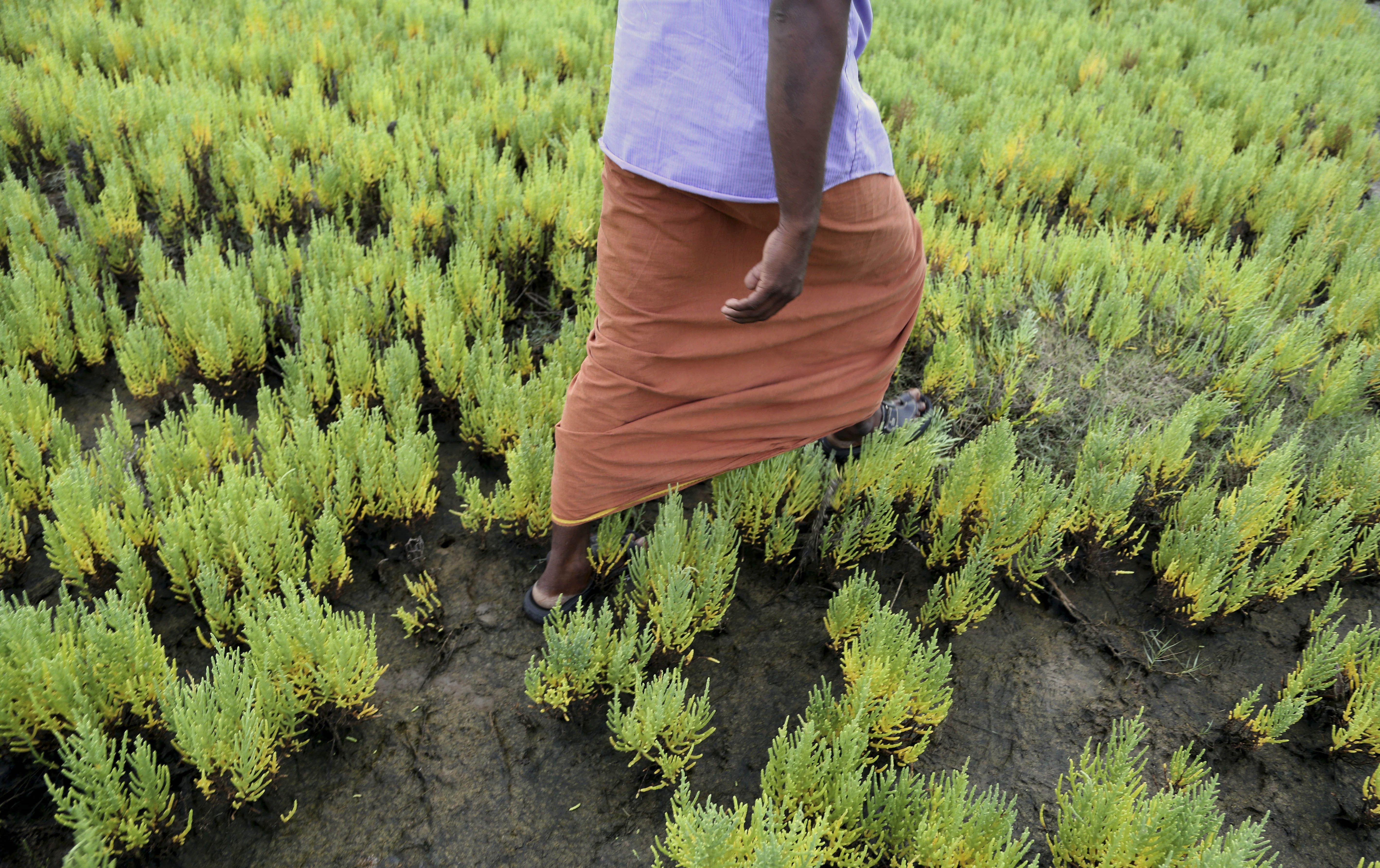 Jardines ofrecen esperanza ante subida de nivel de aguas for America todo un inmenso jardin
