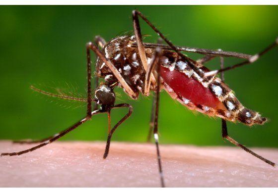 Centro para el Control de Enfermedades aumentó a nivel 1 la emergencia  por el virus Zika