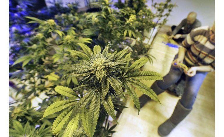 Senado de Florida aprueba ampliar uso medicinal de la marihuana a pacientes terminales