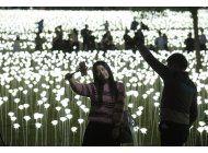 hong kong celebra san valentin con 25.000 rosas de luz