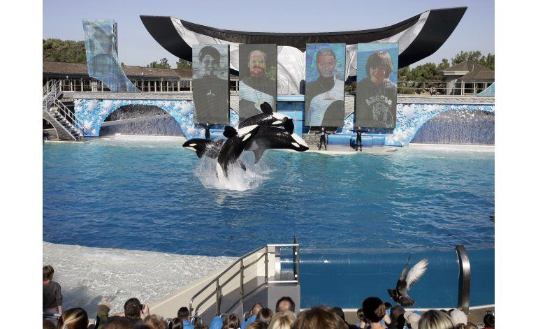 SeaWorld admite haber infiltrado a empleado entre activistas