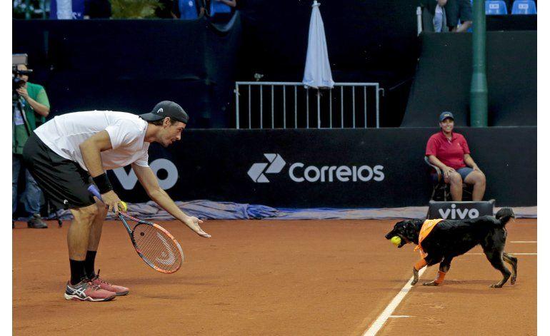 Perros recogepelotas se roban el show en tenis en Brasil