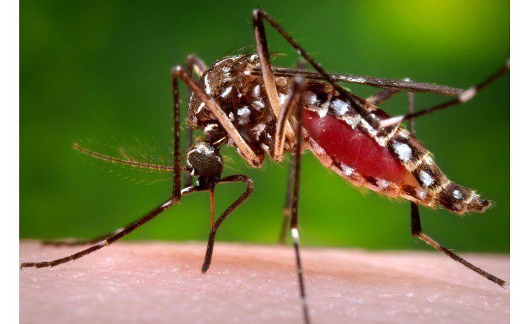 Detectan 3 nuevos casos de Zika en Miami Dade