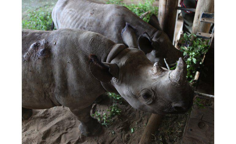 Rinocerontes prosperan en refugio sudafricano