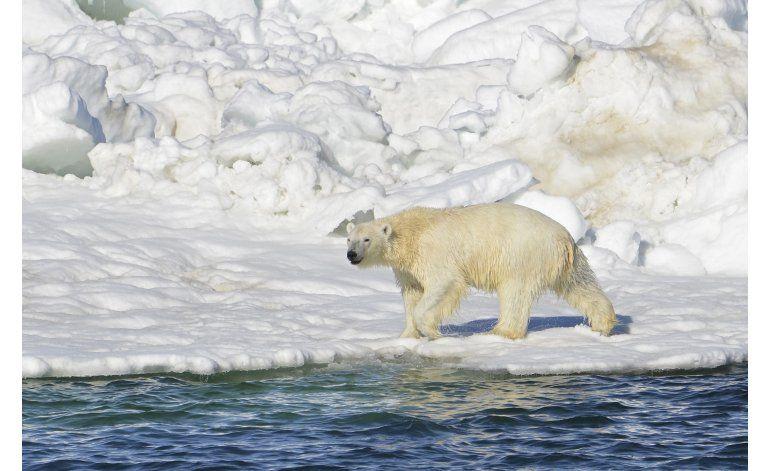 Corte ratifica protección de hábitat de osos polares