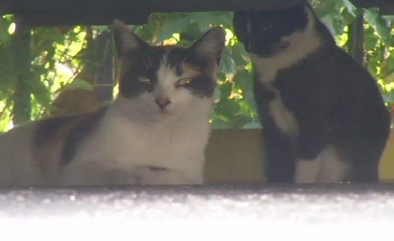 Encuentran gatos decapitados en West Flagler
