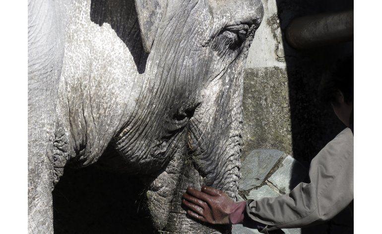 Zoo de Tokio mejorará la situación de elefanta del parque