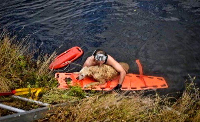 Equipo de bomberos  rescata a una perrita en un canal de Miami