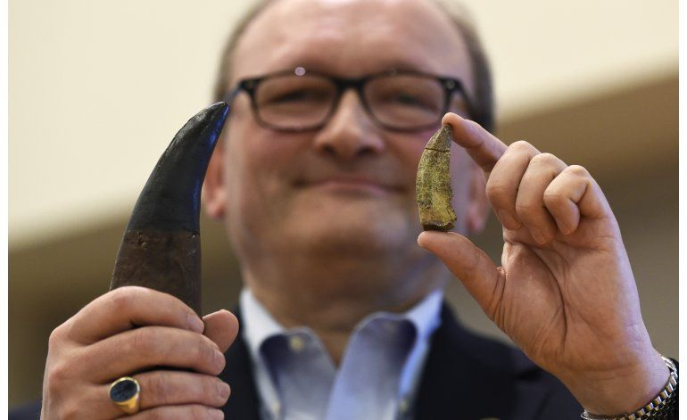 Fósil aporta conocimiento sobre evolución del T. rex