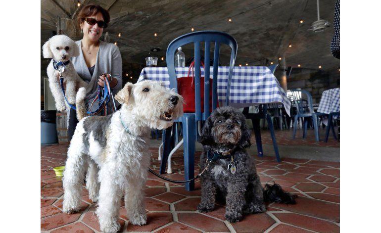 ¡Sentado! Perros de NY podrán comer en restaurantes