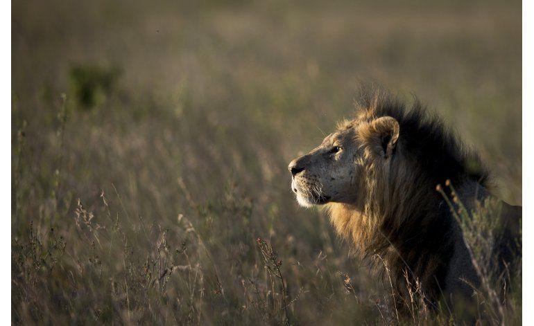 Funcionario: León hiere a 1 tras salir de un parque en Kenia