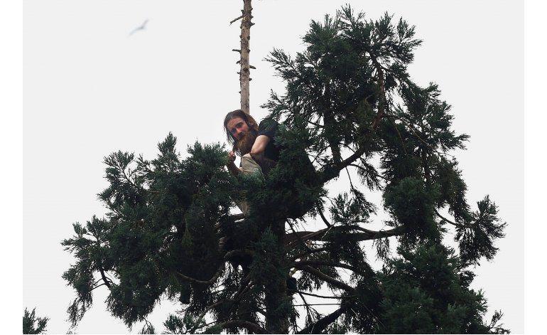 Hombre desciende de pino tras estar trepado casi 25 horas