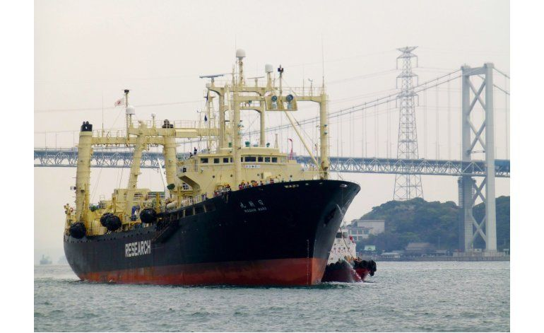 Regresa flota japonesa con 333 ballenas cazadas
