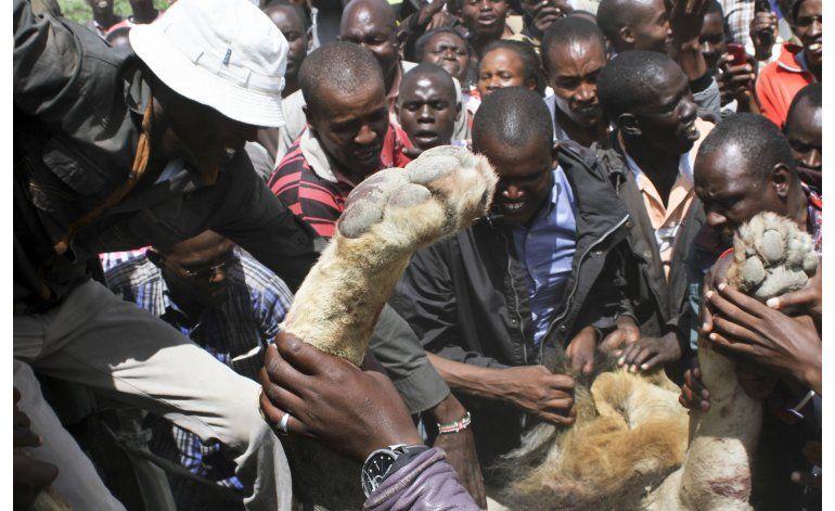 Arponean a dos leones que escaparon de parque en Kenia