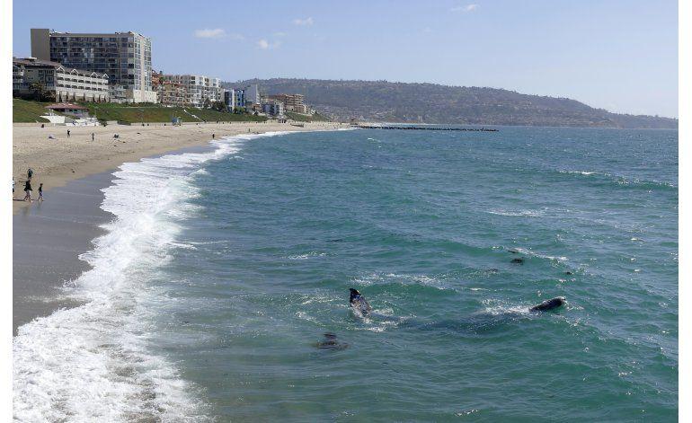 Ballena gris monta espectáculo en playa de sur de California