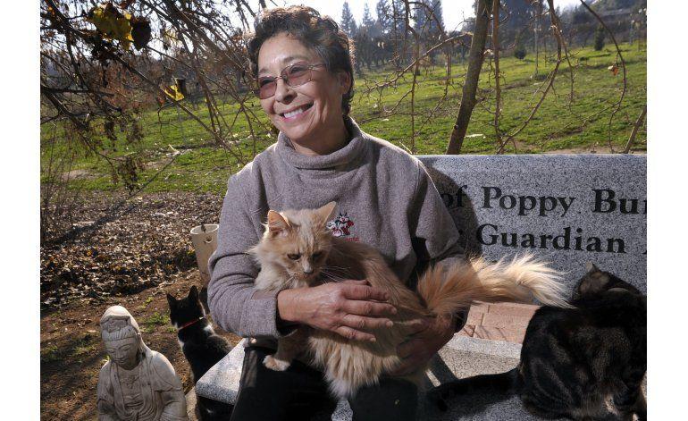 Una mujer en California cuida a miles de gatos