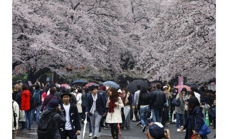 FOTOS AP: La efímera belleza de la flor del cerezo en Japón