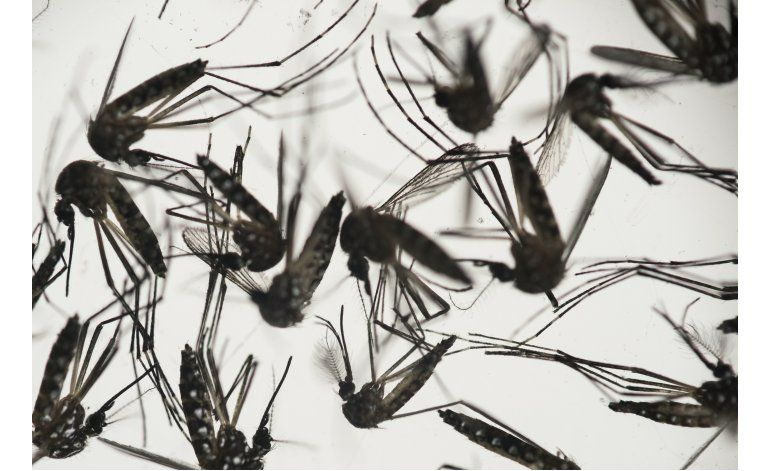 Cuanto más se sabe del zika, más temor inspira