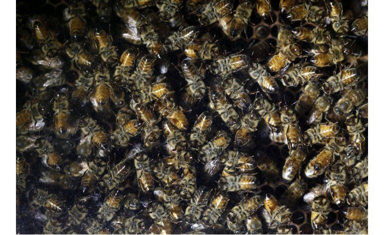 Empresa de EEUU elimina insecticidas que afectan a abejas