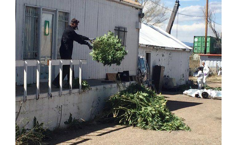 Denver: Decenas de arrestos en operativos contra marihuana