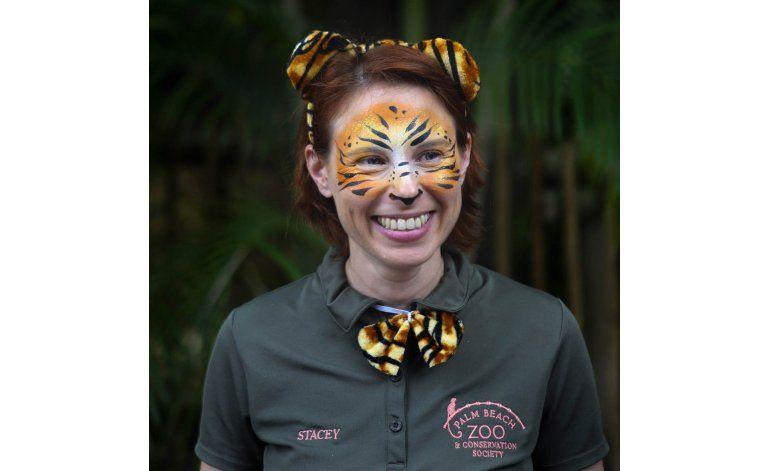 Tigre mata a cuidadora en el Zoo de Palm Beach