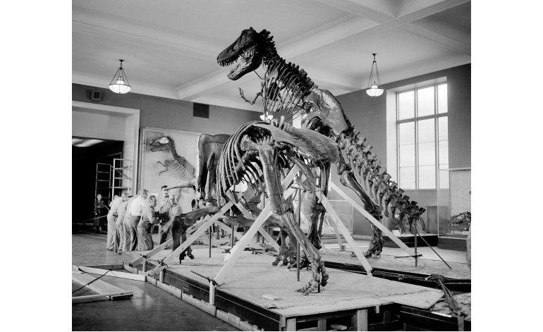 Estudio: Dinosaurios estaban en declive antes del asteroide