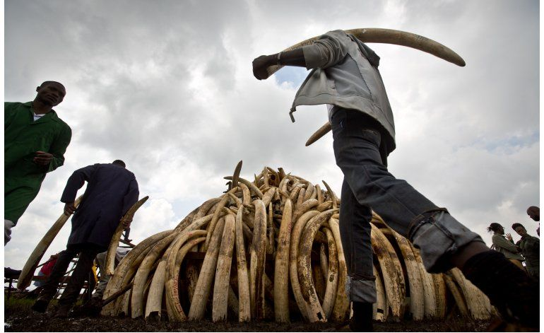 Kenia destruirá marfil para proteger a los elefantes