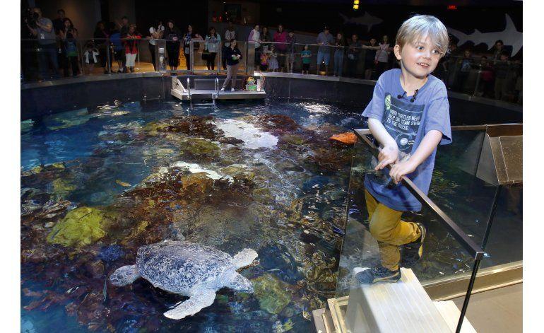 Un niño de Massachusetts renuncia a regalos por las tortugas
