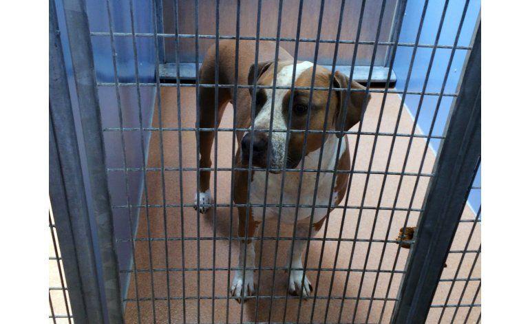 Perro de la familia mata a recién nacido en San Diego