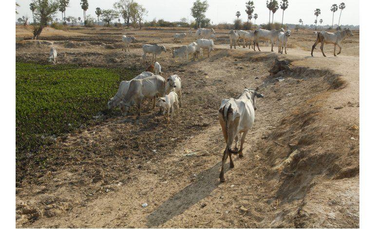 ONU: Sequías por el fenómeno El Niño podrían ser aún peores
