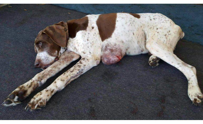Perro perdido por 10 años hallado en Alabama
