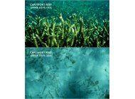 el cambio climatico disuelve la base de los arrecifes