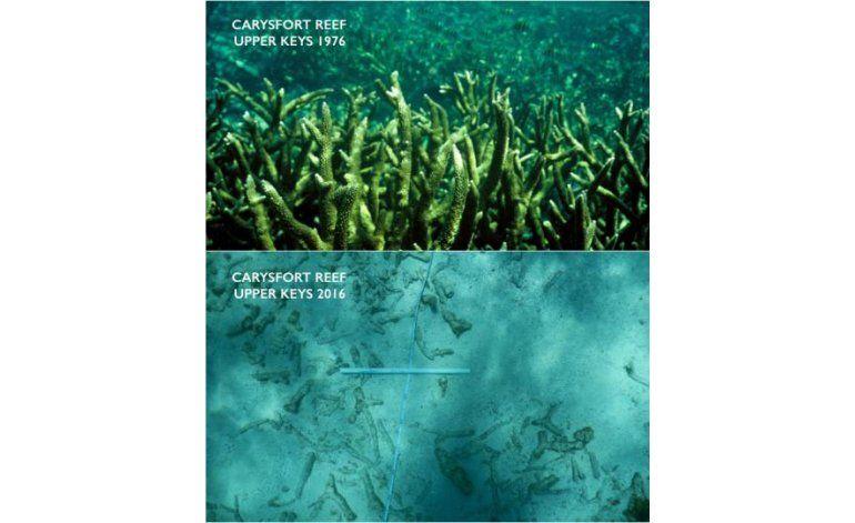 El cambio climático disuelve la base de los arrecifes