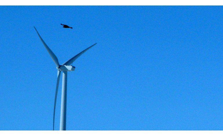 Nueva regla federal permitiría muerte de miles de águilas