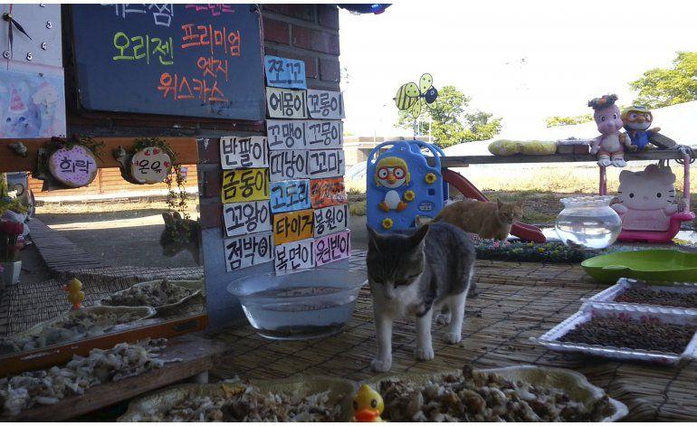 Última moda de internet en Corea del Sur: Gatos comiendo