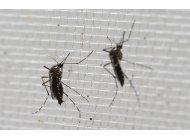 mueren bebes con microcefalia ligada al zika en panama