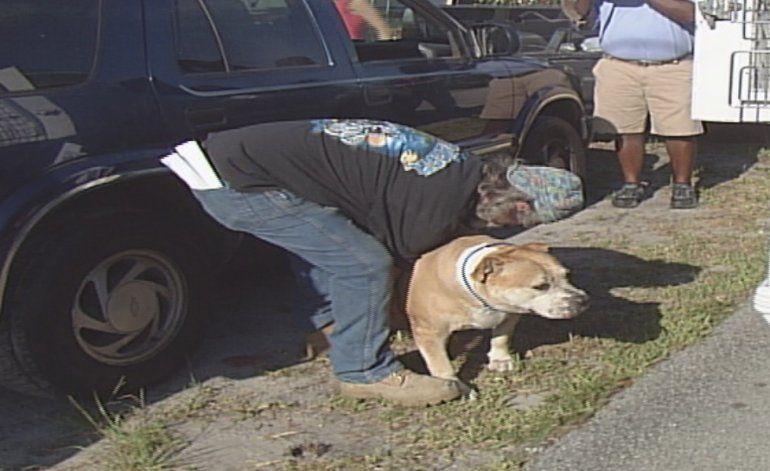 Perros atacan a dos mujeres y matan a perrito en Hollywood