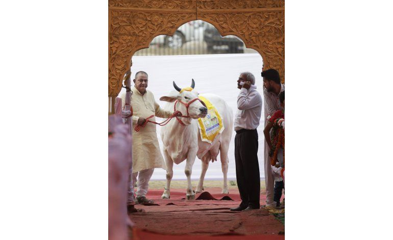 India organiza certamen de belleza para ganado autóctono