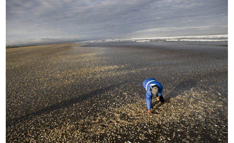 Chile: gobierno pagará bono contra voluntad de pescadores