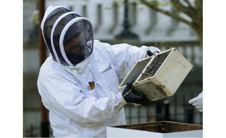 EEUU: Suben muertes de abejas en invierno