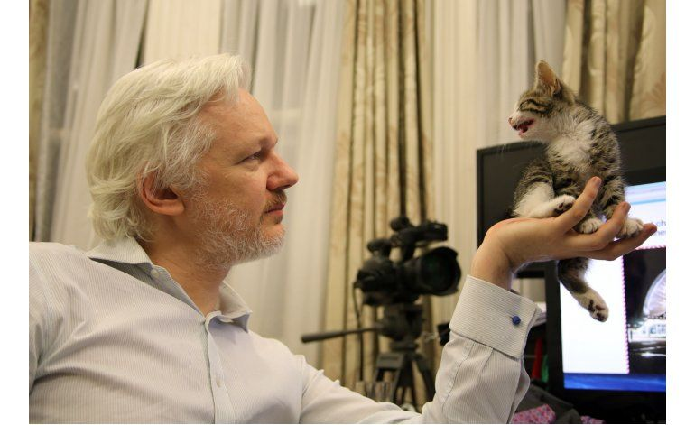Assange tiene un nuevo amigo: un gato le hace compañía