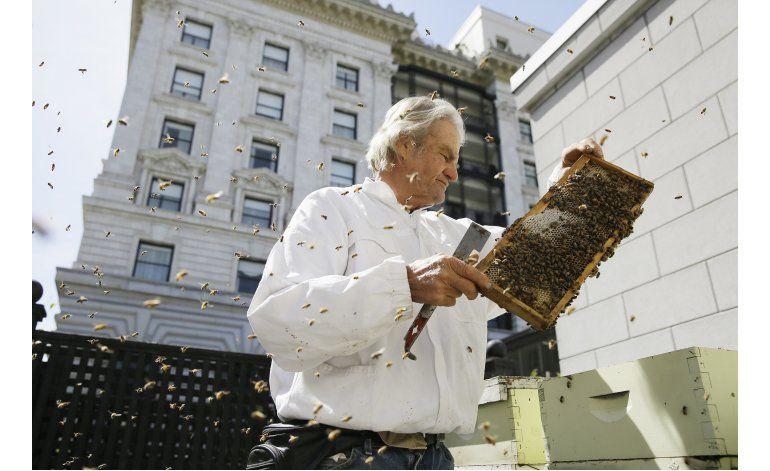 Hoteles de San Francisco instalan colmenas en sus azoteas
