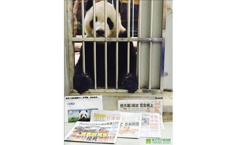 Zoo de Taiwán publica prueba de vida de uno de sus pandas