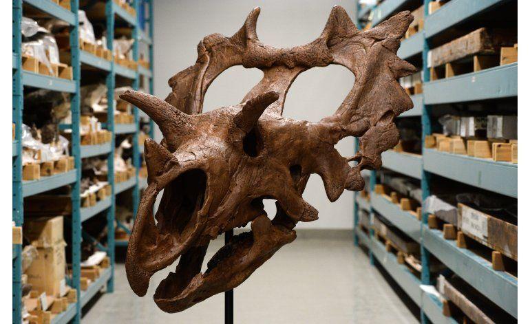 Aficionado descubre en Montana nueva especie de dinosaurio