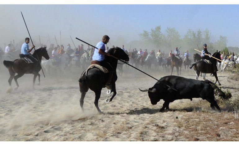 Castilla y León busca prohibir matanza de toros en festival