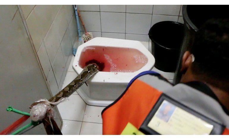 Tailandia: Hombre sobrevive ataque de serpiente en inodoro