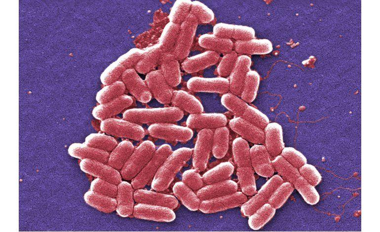 EEUU reporta 1er caso de bacteria inmune a antibióticos